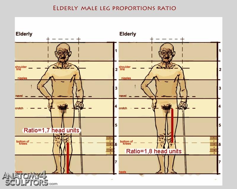 m_1331731_anatomy