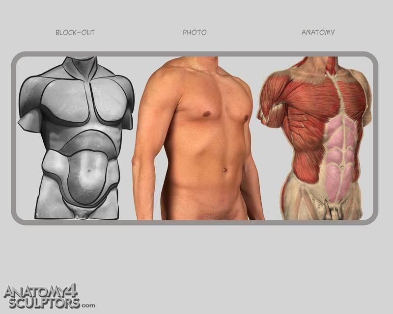 m_1600300_anatomy