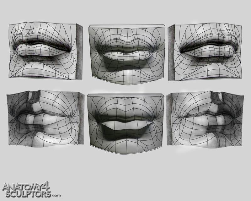 m_1820386_anatomy