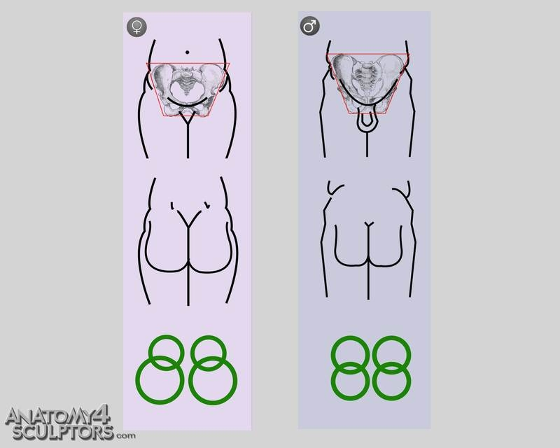 m_2237027_anatomy