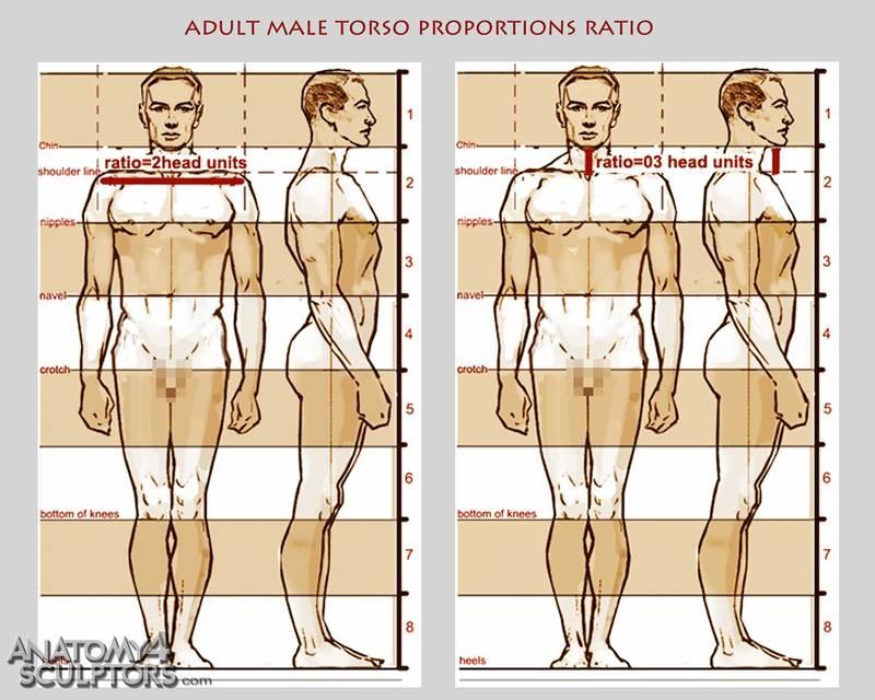 m_2523819_anatomy