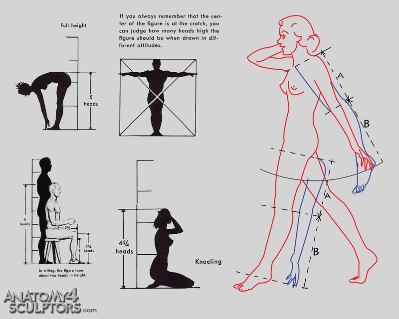 m_2708017_anatomy