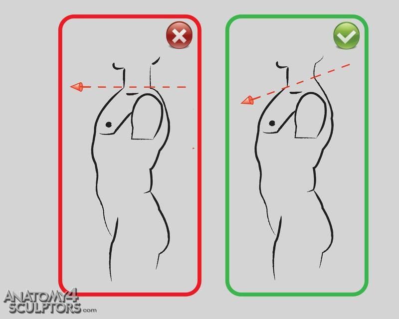 m_3175015_anatomy
