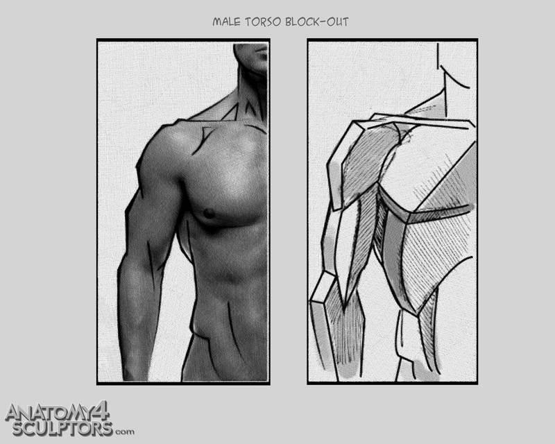 m_3370407_anatomy