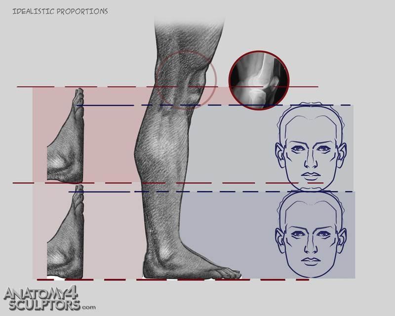 m_3469527_anatomy