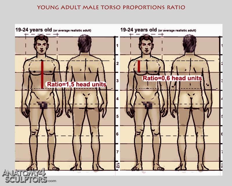 m_3576701_anatomy