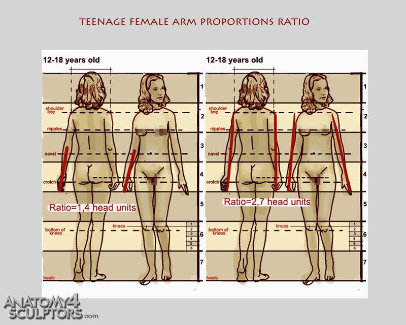 m_4300415_anatomy