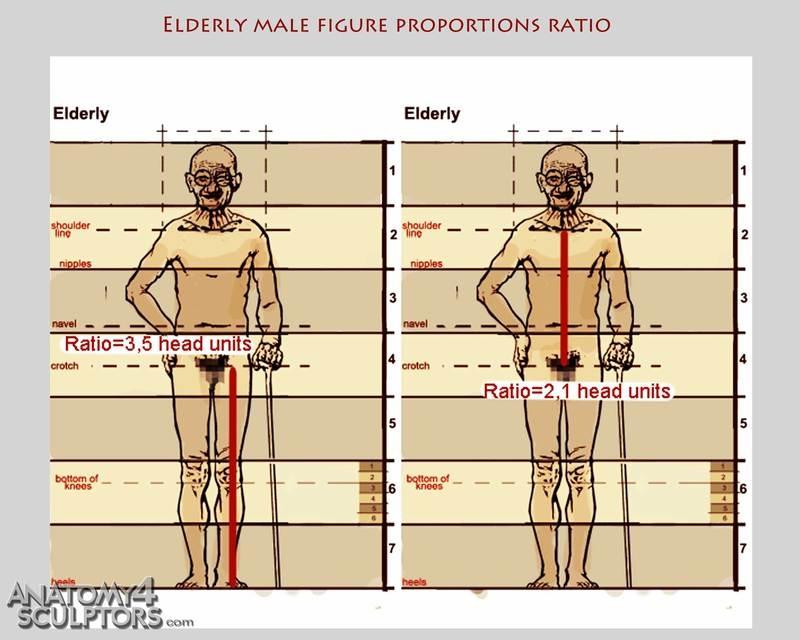 m_4454465_anatomy