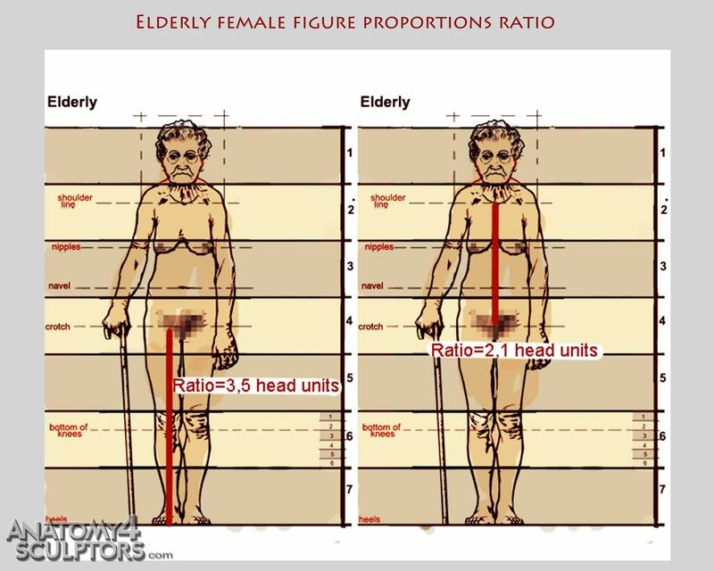m_5933705_anatomy