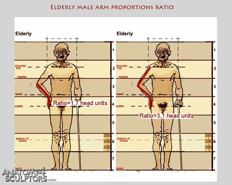 m_7565770_anatomy