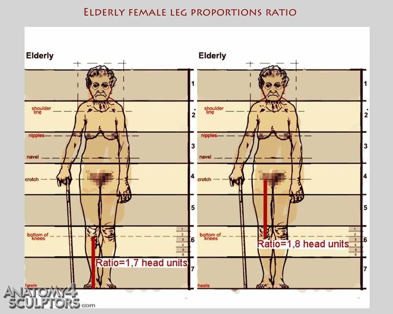 m_7604029_anatomy