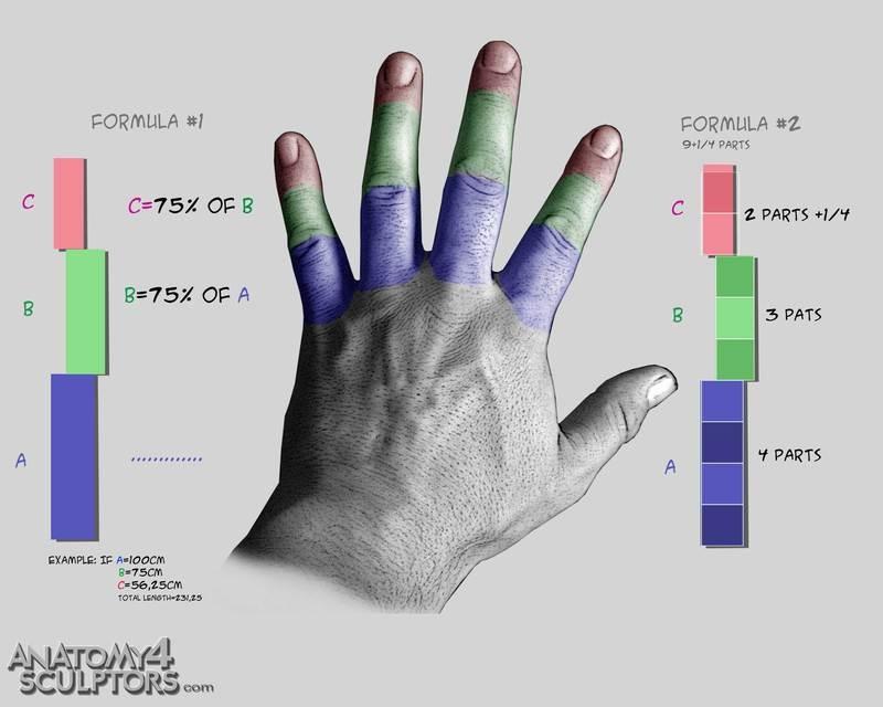 m_7620392_anatomy