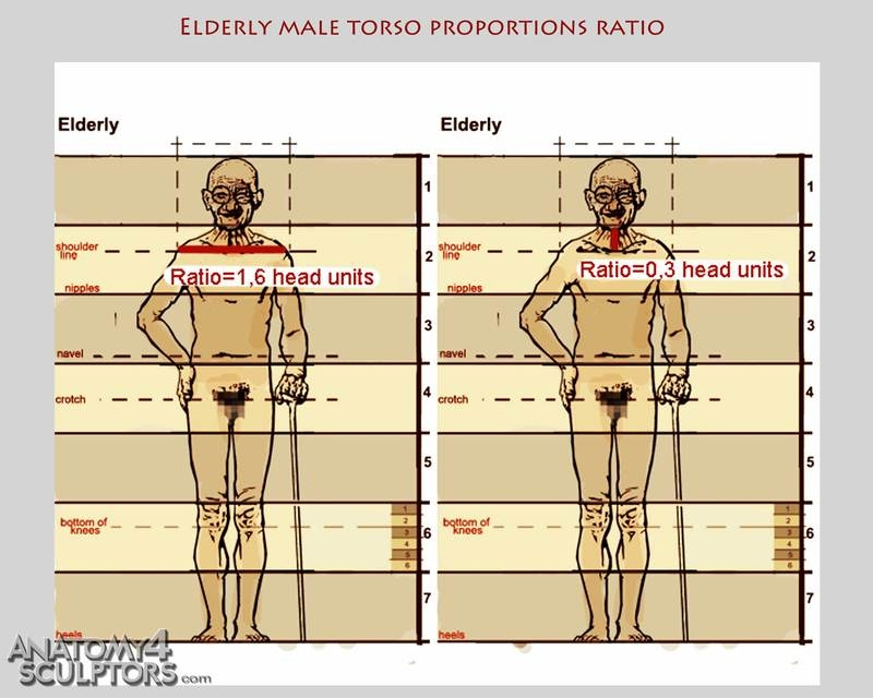 m_7651872_anatomy