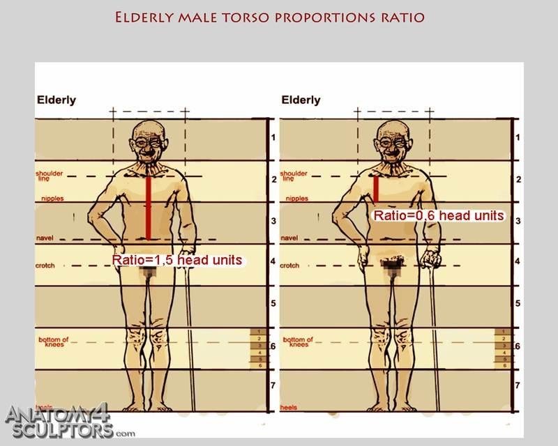 m_8249220_anatomy