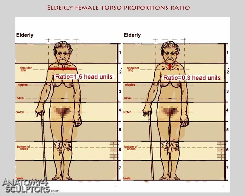 m_8379256_anatomy