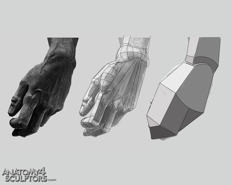 m_9499793_anatomy