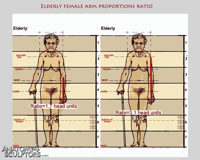 m_9516721_anatomy
