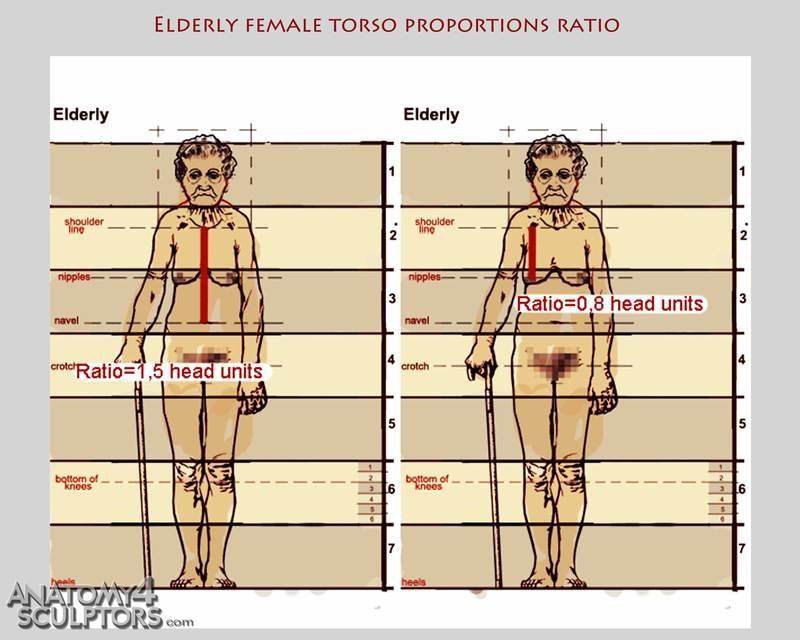 m_9521716_anatomy